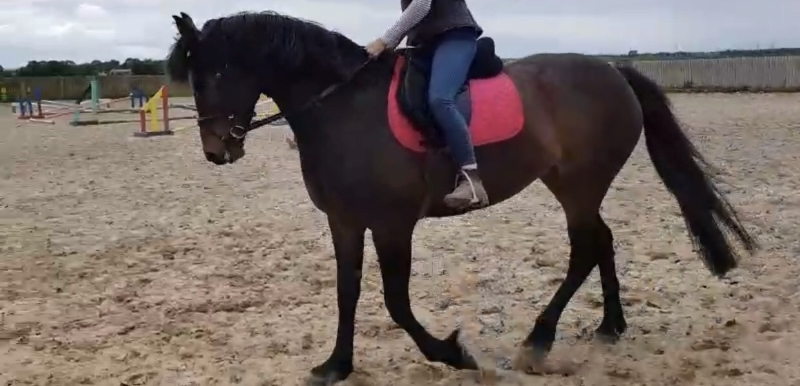 Katyuska being ridden by her new owner